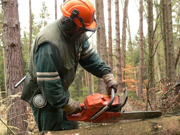 Lesníky tlačí čas
