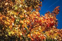 Výkyvy počasí podle meteorologů k podzimu prostě patří.