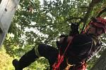 Zvířata hasiči sundávali ze stromu s pomocí lana i plošiny.