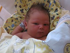 David Pokorný se rodičům Martině Pokorné a Josefovi Karadimu z Kralup nad Vltavou narodil v mělnické porodnici 17. srpna 2013, vážil 4,18 kg a měřil 52 cm. Na brášku se těší 14letá Michaela.