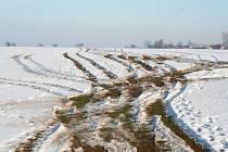 Takhle dopadla pole po řádění čtyřkolkářů.