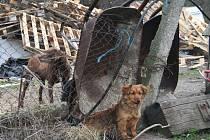 Zanedbaní psi často svým majitelům utíkají.