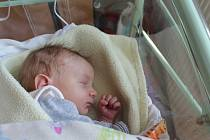 Matyáš Ježek, Hlavenec. Narodil se 30. 4. 2019, po porodu vážil 2793 g a měřil 48 cm. Rodiče jsou Petr a Jiřina Ježkovi.