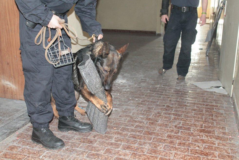 Štěňata si zatím hlavně hrají. Už teď ale prokazují předpoklady, že se mohou stát platnými členy policejního sboru.