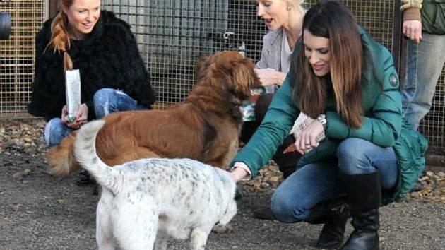 Za opuštěnými psy na Hrombabu přijely i tři modelky, Romana Pavelková, Lucie Křížková a Barbora Vida