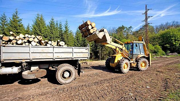 Povolenou těžbu z větší části naplňují kůrovcové kalamity.