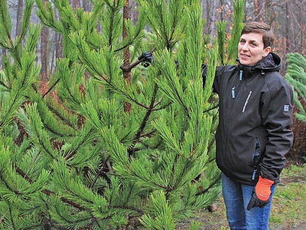 Na Chloumku si podle Vladimíry Kozákové (na snímku) lidé vybírají nejčastěji borovice černé.