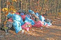 Takto nyní vypadá lesní zákoutí na Chloumku, kde bylo pohozeno několik pytlů s odpadky