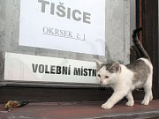 Volby 2014 v Tišicích.