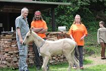 Den koní ve Stránce