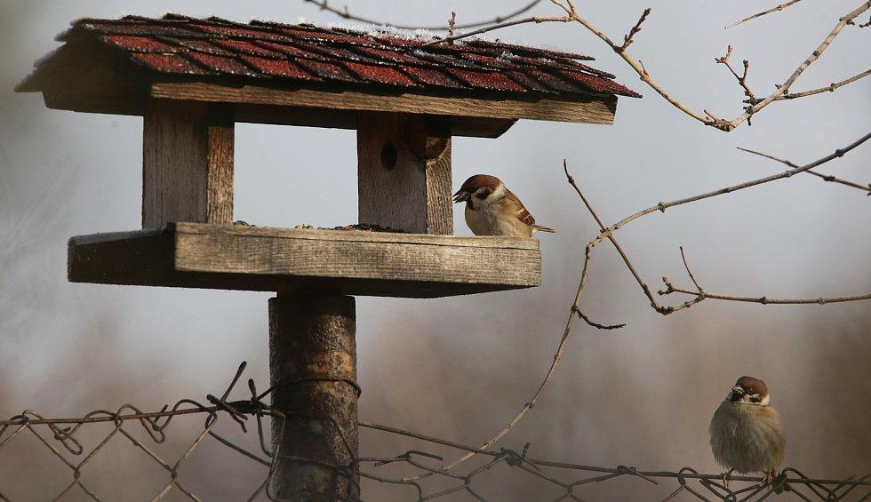 Vrabci u krmítka.