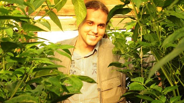 Jakub Pátra pěstuje chilli papričky ve fóliovnících nedaleko Mělníka.