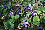 Příroda se převléká na jaro.