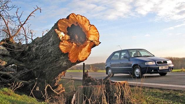 Ve kmenech stromů jsou dutiny.