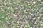 Náruživé kuřáky nezastaví ani informační tabule se zákazem kouření.