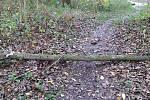 Cestu ke Spolaně v Libiši zavalil kmen stromu.