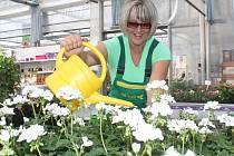 Zalévání je věda. Dobrý zahradník musí vědět, kdy a kolik vláhy musí každé rostlině dopřát.