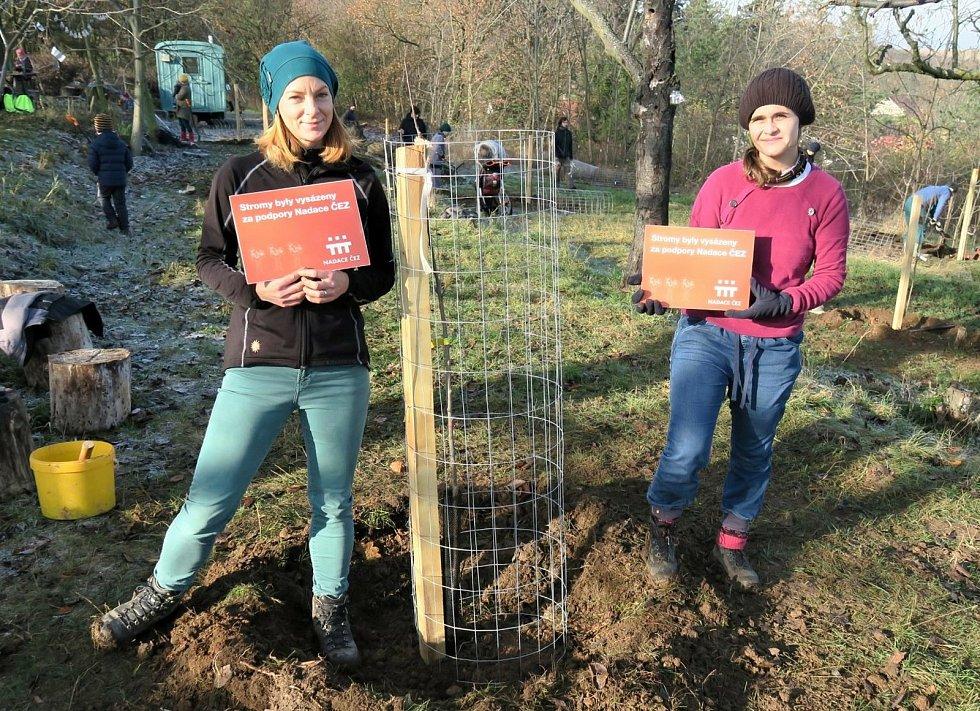 Členové komunitního spolku Lešanský sad se loňského listopadu pustili do výsadbu nových ovocných stromů v sadu Višňovka v Lešanech u Nelahozevsi.