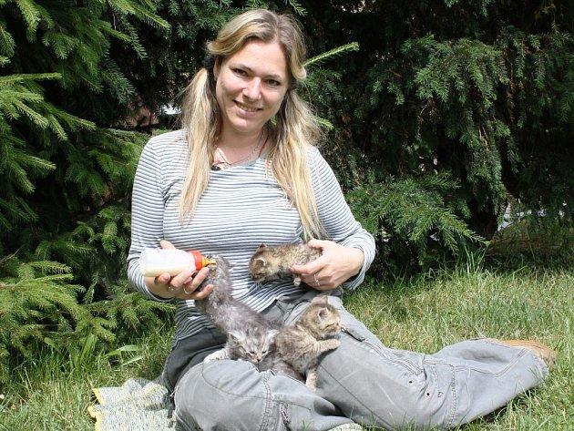 Dva dlouhosrstí šediví kluci se do útulku dostali poté, co jim zemřela maminka. Další dvě  koťata, mourovatá, někdo o pár dní později nechal u brány útulku. Teď jsou jim zhruba čtyři týdny a pomalu přecházejí na pevnou stravu. Umístěna jsou v domácí péči.