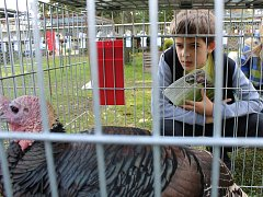 Chovatelé v Tišicích pořádali okresní výstavu drůbeže a místní výstavu králíků a holubů.