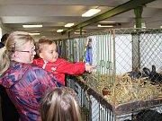 Na chovatelské výstavě v Cítově bylo k vidění téměř pět stovek králíků, asi 65 holubů a 129 kusů drůbeže.