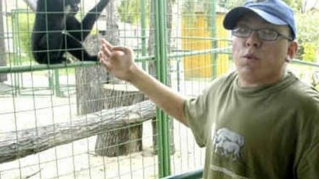 SAMEC gibona žlutolícího (na snímku) v sobotu před polednem v chlebské zoo pokousal tříletého chlapce. Podle svědků se jednalo o chybu rodičů, kteří nechali dítě bez dozoru.
