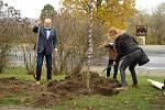V Jungmannových sadech v Mělníku byl během sváteční neděle zasazen památný strom svobody, který městu věnoval Mělnický osvětový a okrašlovací spolek k třicátému výročí sametové revoluce.