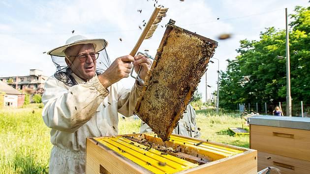 Ve Spolaně, kde loni ve spolupráci s místními včelaři začali s chovem včel a letos původní počet tří úlů ještě o dva zvýšili, už mají za sebou historicky druhé vytáčení medu.