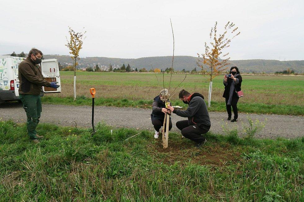 Štěpánka Andrešová a Jiří Vyhnal vysazují svůj strom v pražských Lipencích. Vše dokumentuje místostarostka Ivana Žáková. Vlevo dohlíží arborista Jiří Řežábek.