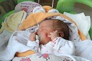KRISTÝNA REJZLOVÁ se rodičům Daně a Lukášovi z Brandýsa nad Labem narodila v mělnické porodnici 30. ledna 2018, vážila 3,09 kg a měřila 49 cm. Doma se na ni těší 5letá Karolínka.