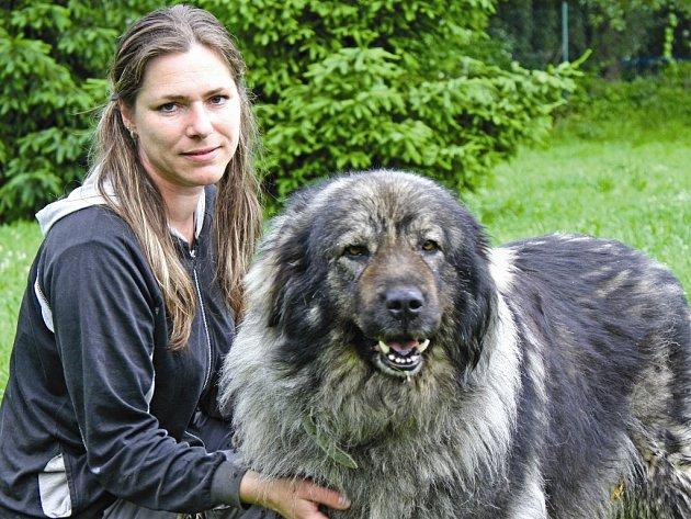 Asta je fenka šarplaninského pasteveckého psa ze Zelčína, kterou do útulku přivezli lidé poté, co její majitelku evakuovali a fenka zůstala ve vsi.