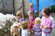 Příměstské tábory nabízejí i výlety za zvířátky. Ilustrační foto.