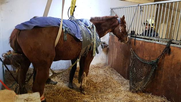 Hasiči zasahovali u zraněného koně, který upadl v boxu a nedokázal se sám zvednout.