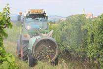 Na vinicích bylo letos nezbytné aplikovat větší množství chemických postřiků, aby se hrozny udržely v dobrém stavu.