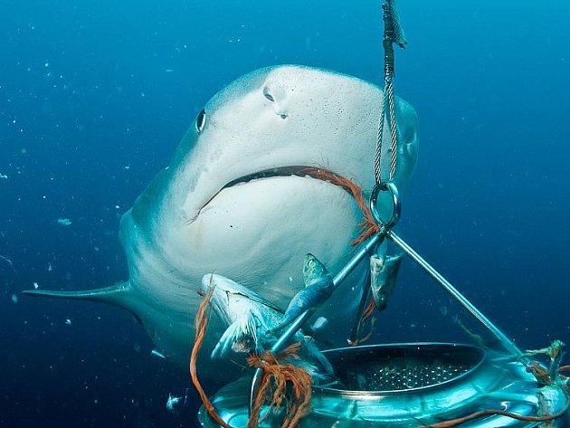 Tým českých potápěčů natáčel a fotil žraloky v jižní Africe bez jakékoli ochrany