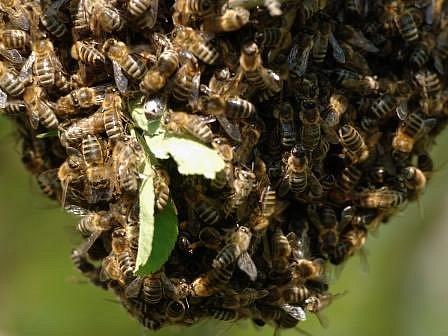 """""""Polovina lidí mne volá na pomoc a druhá polovina lidí mne za hubení nebezpečných včel velmi kritizuje"""", říká deratizátor."""