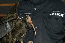 Ibise skalního z pražské zoo odchytil v Kralupech nad Vltavou policista Adam Šimůnek.