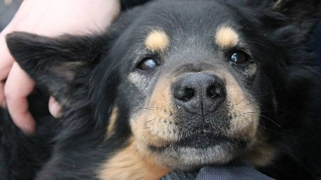Případy týraných zvířat jsou zaznamenány také na Mělnicku.