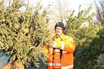 Pracovníci mělnických technických služeb vysloužilé vánoční stromečky svážejí několikrát týdně.