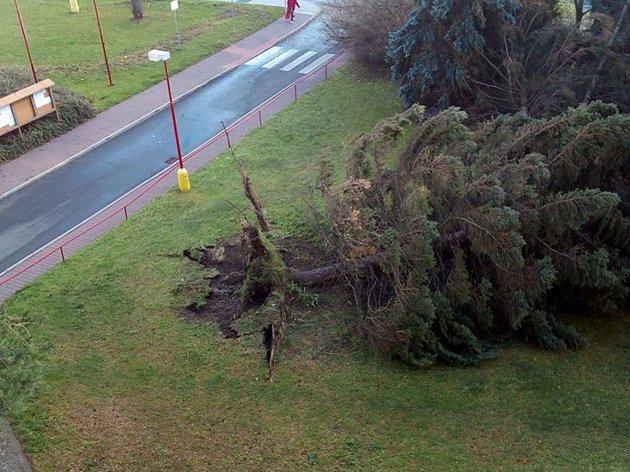 Na Kojetické v Neratovicích padly už tři stromy.