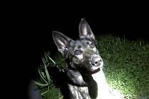 Služební pes vyčenichal ukryté muže. Nic nelegálního ale neudělali.
