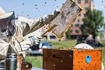 Ve Spolaně Neratovice stočili padesát kilo medu.