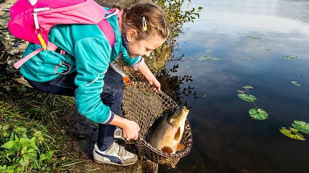 Labe u Neratovic oživily stovky kilogramů nových ryb.