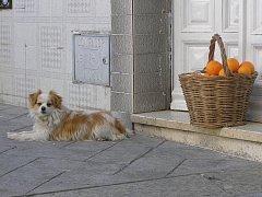 Španělský prodavač pomerančů