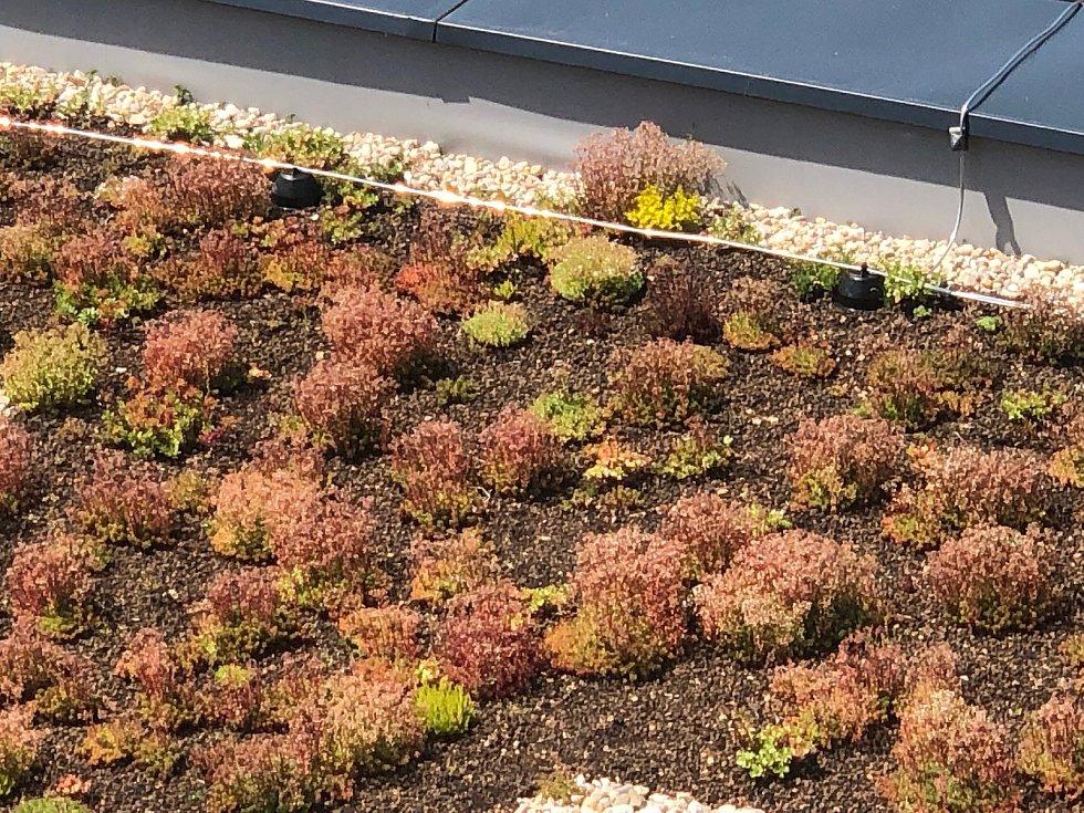Takto může vypadat zelená střecha.