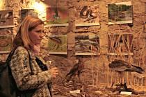 Regionální muzeum Mělník otevřelo výstavu Nespoutaná řeka, která seznámí návštěvníky s přírodou říční krajiny a významem řek pro člověka.