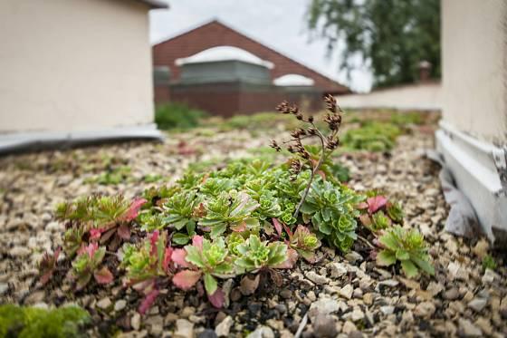 Zelená střecha. Ilustrační foto.