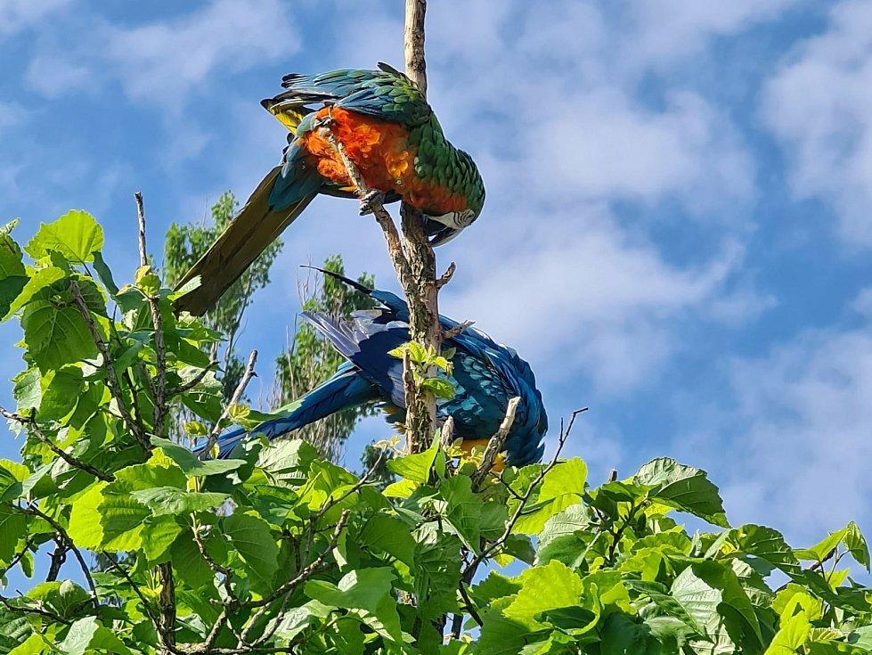 Pro Čechy netradiční ptactvo bývá volně vidět v Mělníce