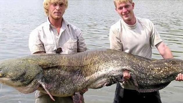 KOLOS. Za takovými obřími sumci někteří místní rybáři jezdí až dva tisíce kilometrů daleko. Nyní je mají téměř doma.