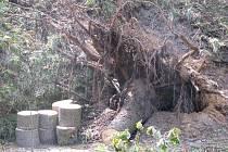 Lesy Kokořínského dolu jsou turistům nepřístupné. Kvůli bezpečnosti tam byl vydán zákaz vstupu.